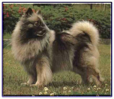犬の画像 p1_10